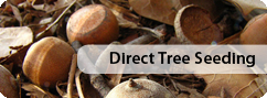 direct tree seeding