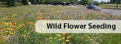 Wild Flower Seeding